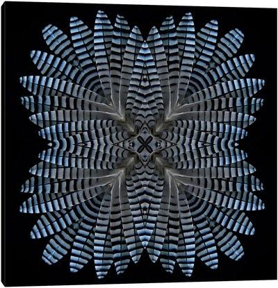 Jay Feather Star Canvas Art Print