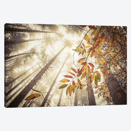 Misty Autumnal Heights Canvas Print #FEN31} by Alyson Fennell Canvas Art