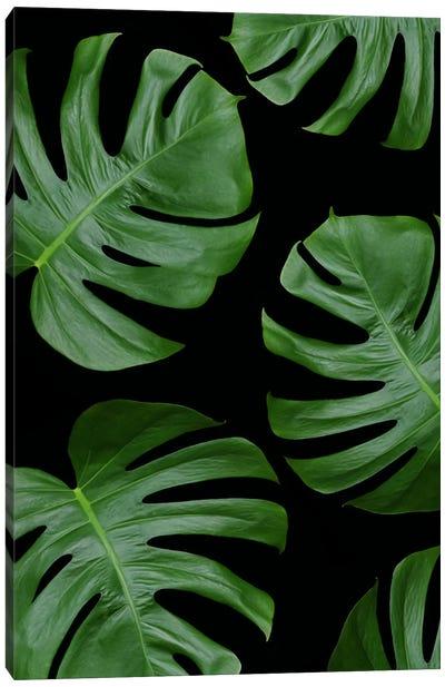 Monstera Leaves On Black Canvas Art Print
