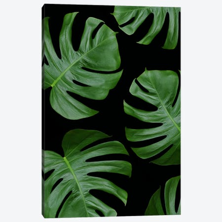 Monstera Leaves On Black Canvas Print #FEN32} by Alyson Fennell Canvas Artwork