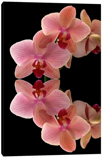 Orchids Arch Canvas Art Print