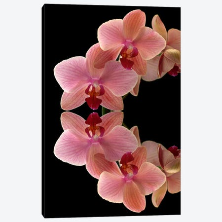 Orchids Arch Canvas Print #FEN33} by Alyson Fennell Canvas Wall Art