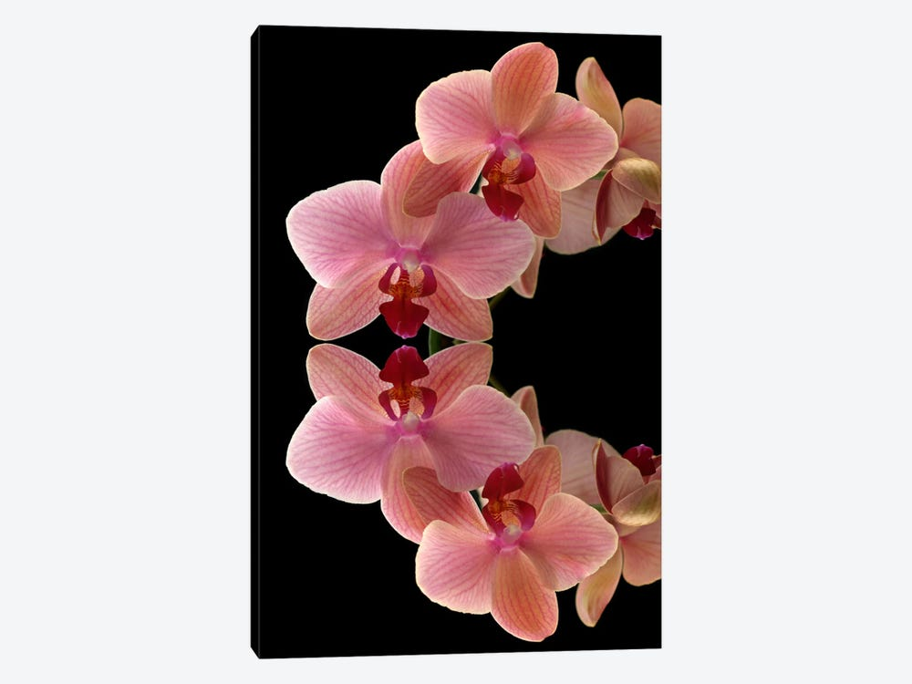 Orchids Arch by Alyson Fennell 1-piece Canvas Art Print