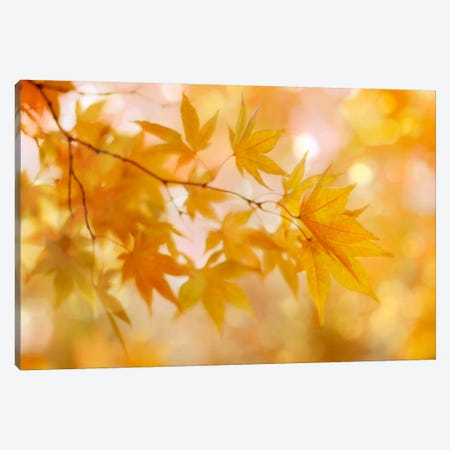 Peachy Autumn Leaves Canvas Print #FEN35} by Alyson Fennell Canvas Print