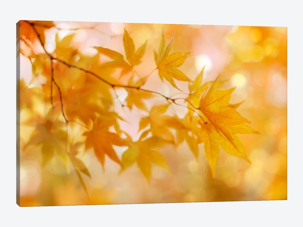 Peachy Autumn Leaves by Alyson Fennell 1-piece Canvas Print