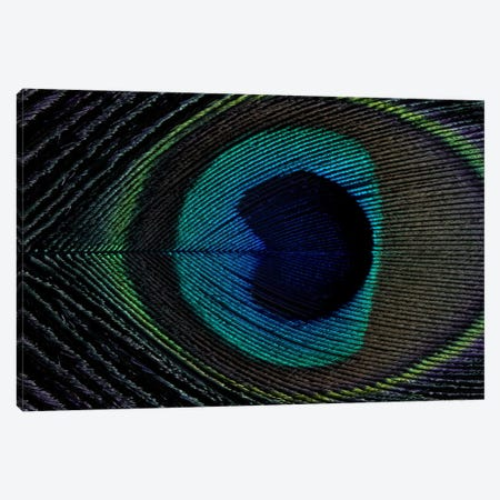 Peacock Feather I Canvas Print #FEN36} by Alyson Fennell Canvas Print