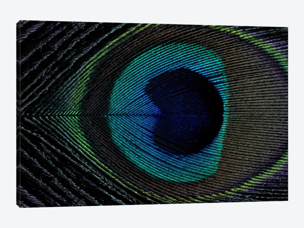 Peacock Feather I by Alyson Fennell 1-piece Canvas Art
