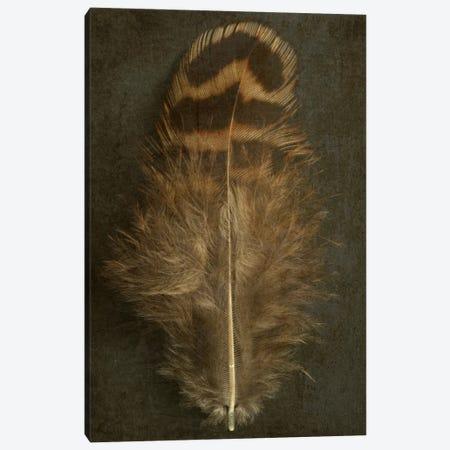 Pheasant Hen Feather Canvas Print #FEN38} by Alyson Fennell Canvas Art