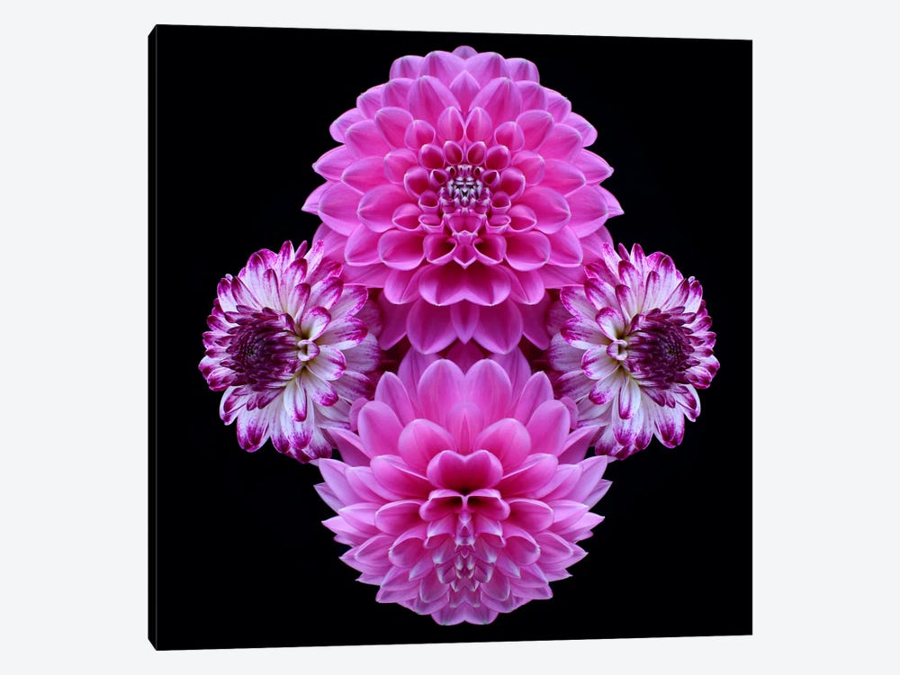 Pink Dahlia Mirror by Alyson Fennell 1-piece Canvas Art Print
