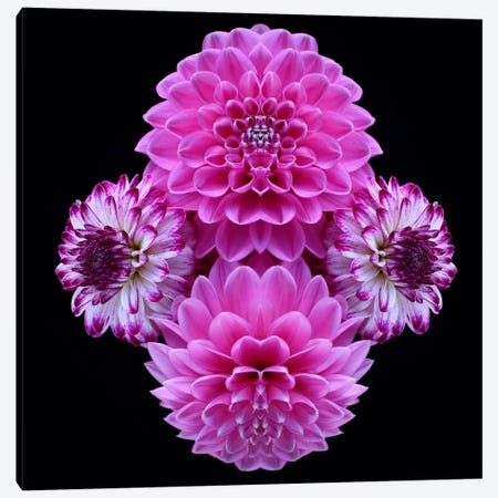 Pink Dahlia Mirror Canvas Print #FEN39} by Alyson Fennell Canvas Wall Art