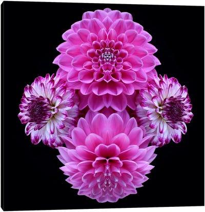 Pink Dahlia Mirror Canvas Art Print