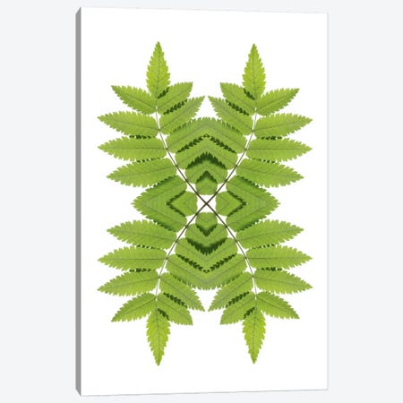 Ash Leaf Mirror Canvas Print #FEN3} by Alyson Fennell Canvas Artwork