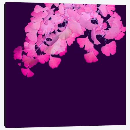 Pink Ginkgo Biloba I Canvas Print #FEN40} by Alyson Fennell Canvas Print