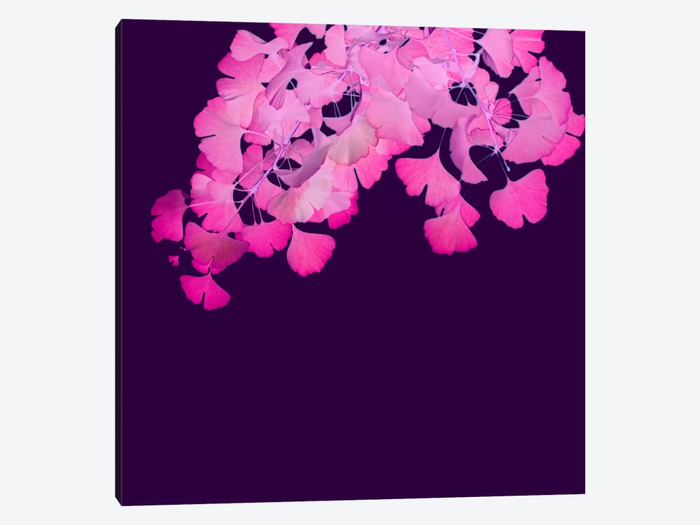 Pink Ginkgo Biloba I by Alyson Fennell 1-piece Canvas Print