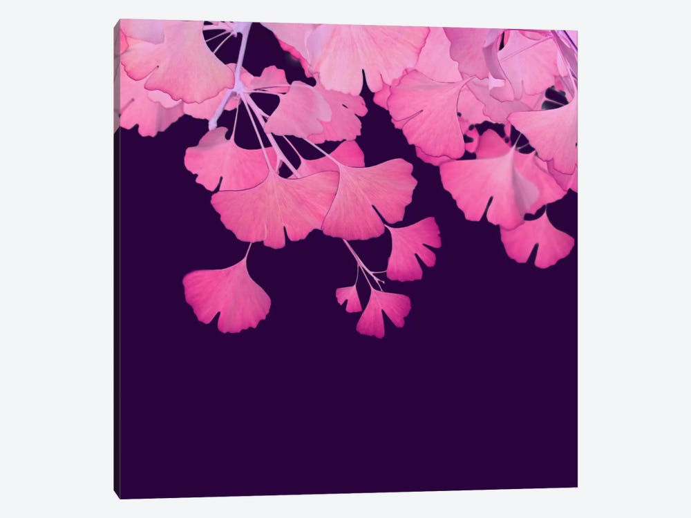 Pink Ginkgo Biloba III by Alyson Fennell 1-piece Canvas Art Print