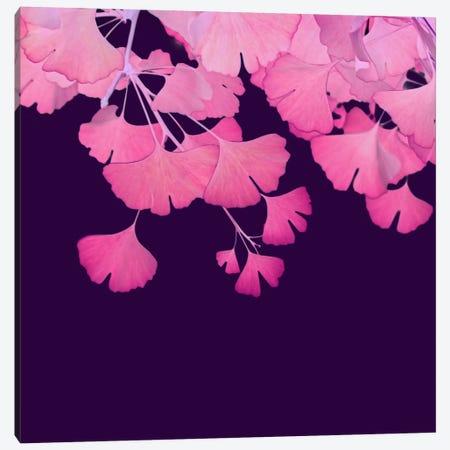 Pink Ginkgo Biloba III Canvas Print #FEN42} by Alyson Fennell Art Print