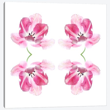 Pink Tulip Quad Canvas Print #FEN45} by Alyson Fennell Canvas Wall Art