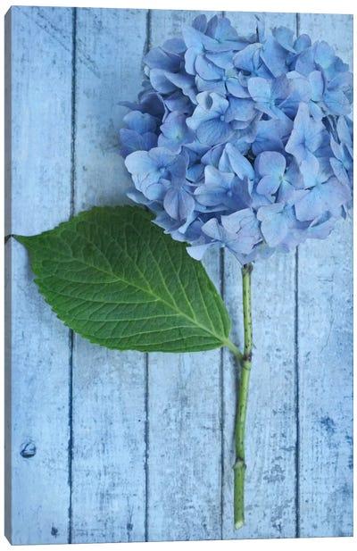 Powder Blue Hydrangea Canvas Art Print