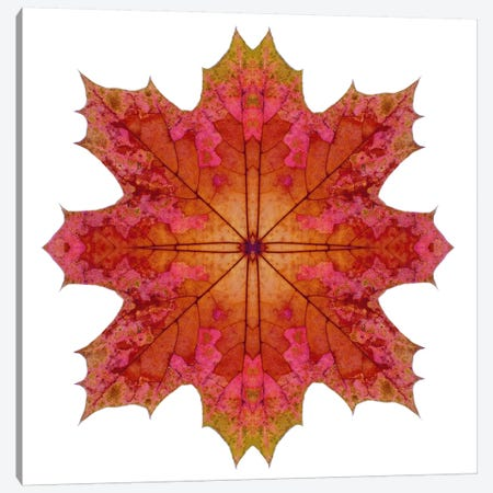 Red And Pink Maple Leaf Star I Canvas Print #FEN47} by Alyson Fennell Canvas Artwork