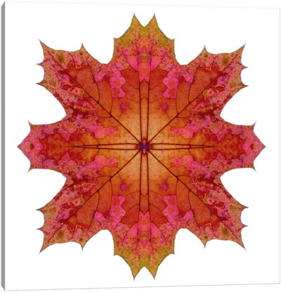 Red And Pink Maple Leaf Star I Canvas Art Print