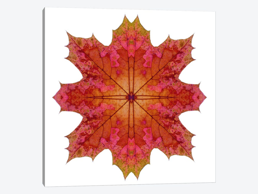 Red And Pink Maple Leaf Star I by Alyson Fennell 1-piece Canvas Artwork