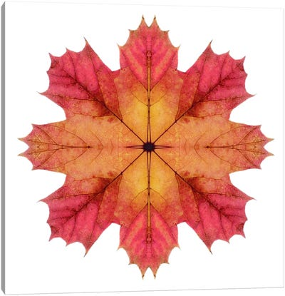 Red And Pink Maple Leaf Star II Canvas Art Print