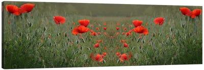 Red Poppy Field Symmetry Canvas Art Print