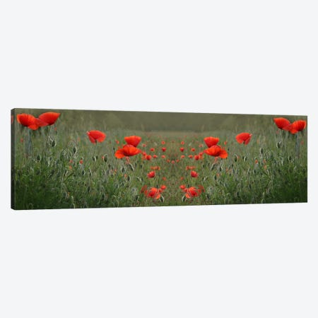 Red Poppy Field Symmetry Canvas Print #FEN51} by Alyson Fennell Canvas Wall Art