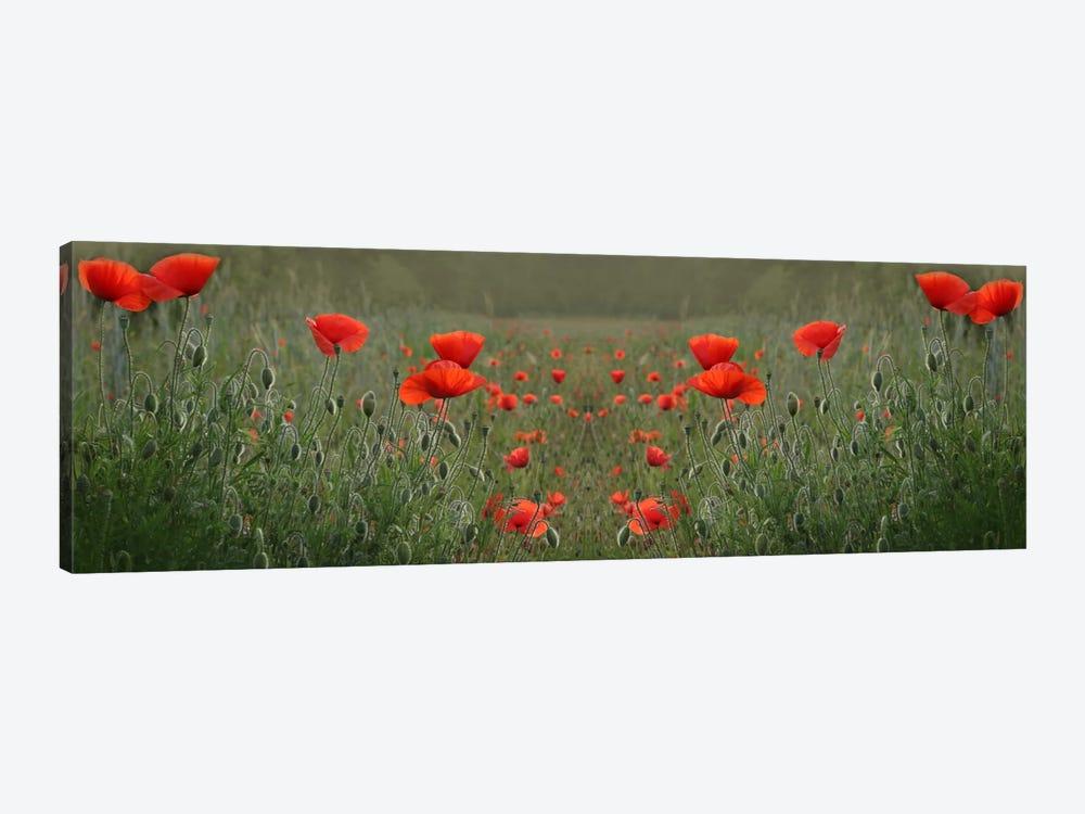 Red Poppy Field Symmetry by Alyson Fennell 1-piece Canvas Print
