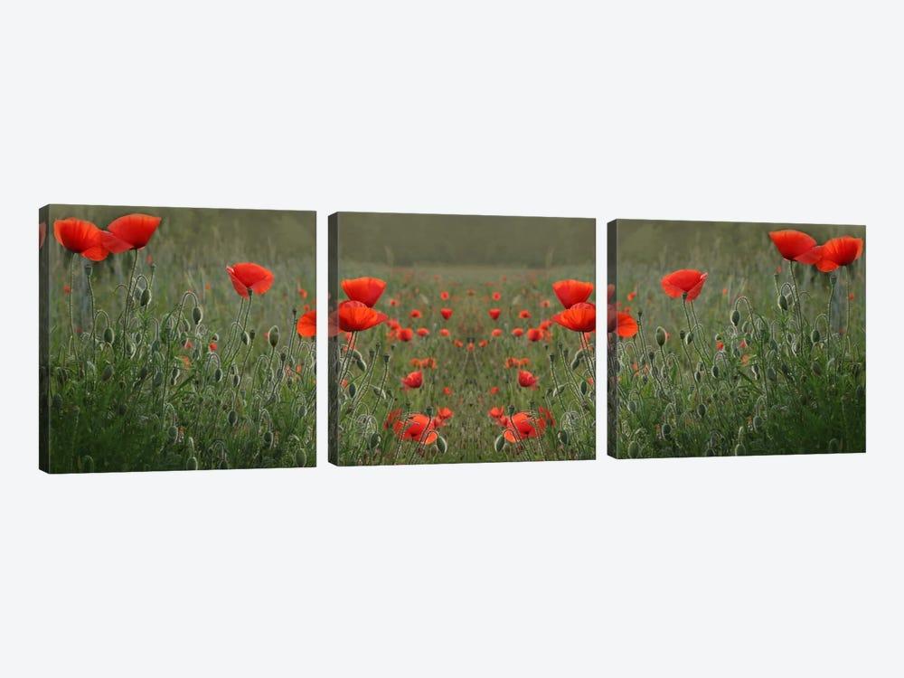 Red Poppy Field Symmetry by Alyson Fennell 3-piece Canvas Art Print