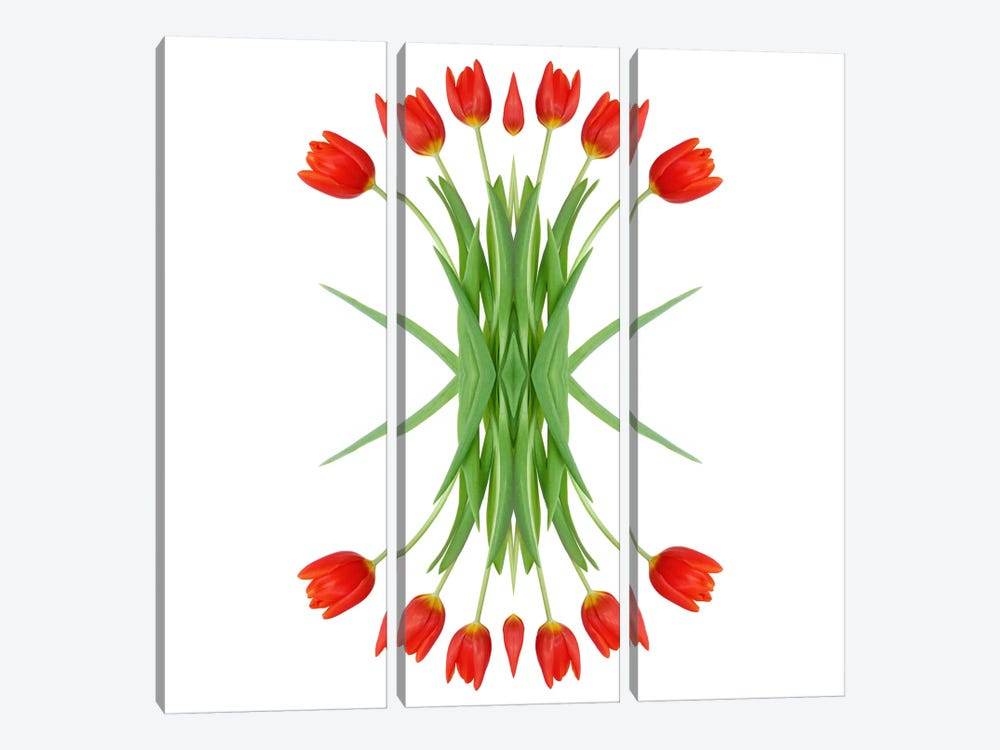 Red Tulip Mirror by Alyson Fennell 3-piece Canvas Wall Art