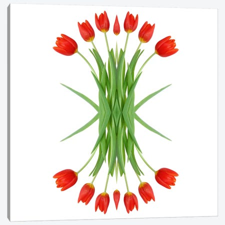 Red Tulip Mirror Canvas Print #FEN52} by Alyson Fennell Canvas Wall Art