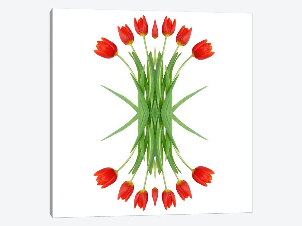 Red Tulip Mirror by Alyson Fennell 1-piece Canvas Art