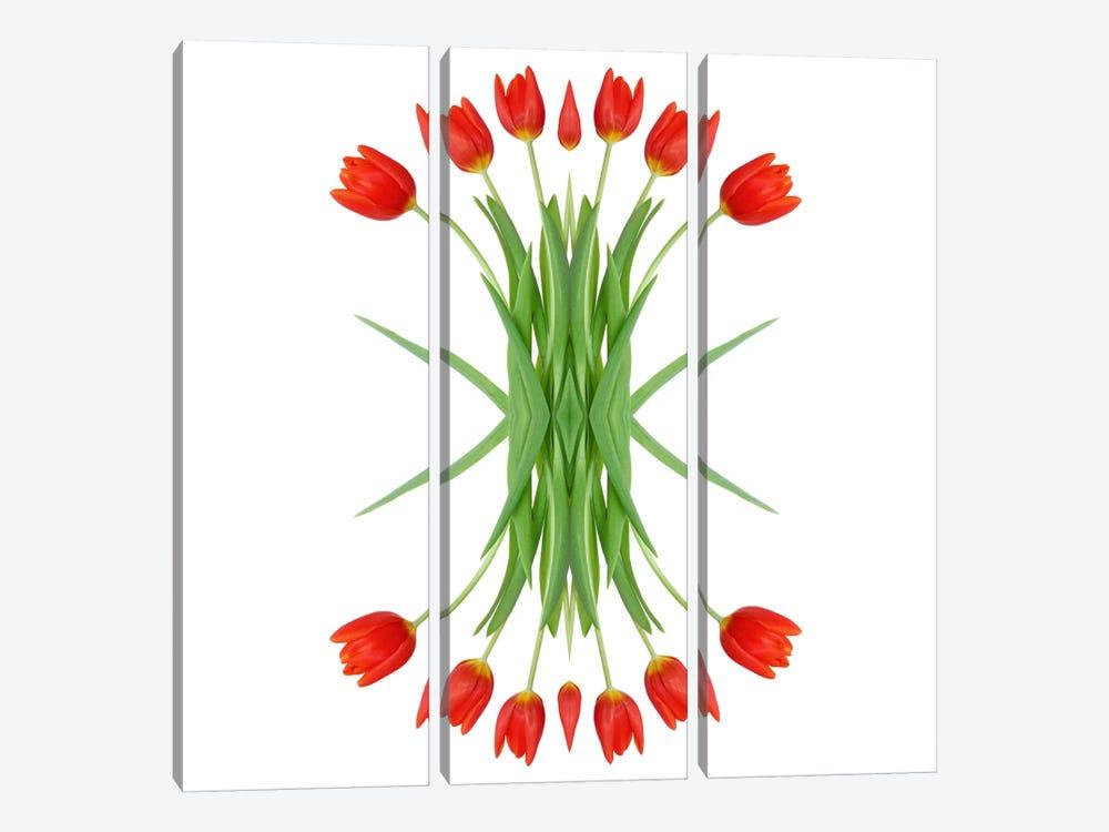 Red Tulip Mirror by Alyson Fennell 3-piece Canvas Wall Art
