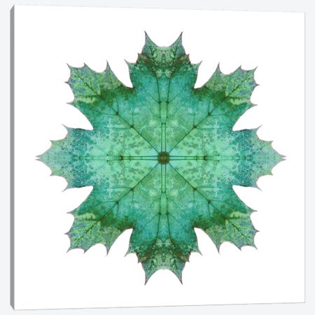 Teal Maple Leaf Star I Canvas Print #FEN56} by Alyson Fennell Canvas Print
