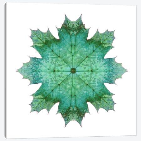 Teal Maple Leaf Star I Canvas Print #FEN56} by Alyson Fennell Canvas Print