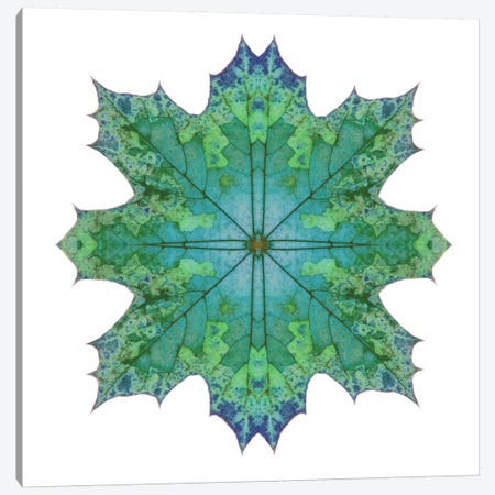 Teal Maple Leaf Star II Canvas Print #FEN57} by Alyson Fennell Canvas Print