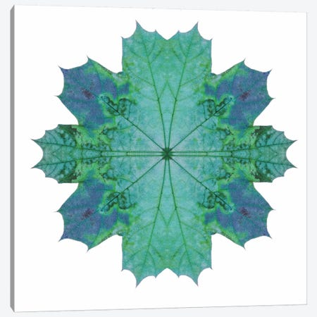Teal Maple Leaf Star III Canvas Print #FEN58} by Alyson Fennell Canvas Artwork