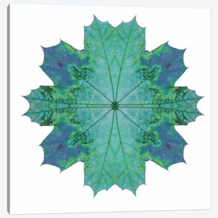 Teal Maple Leaf Star III Canvas Print #FEN58} by Alyson Fennell Canvas Artwork