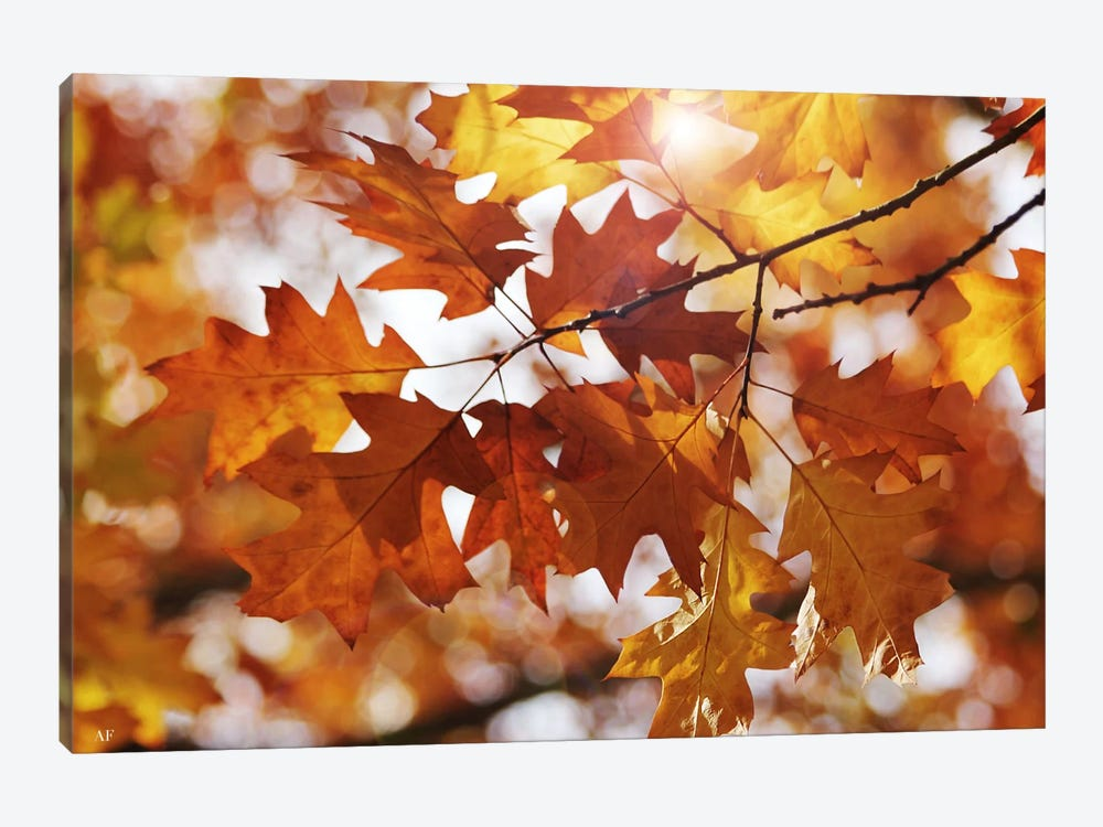Autumn Oak Leaves by Alyson Fennell 1-piece Canvas Wall Art