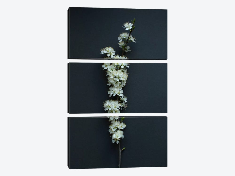 Blackthorn Blossom by Alyson Fennell 3-piece Canvas Artwork