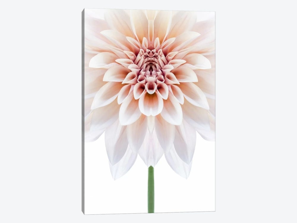 Cafe au Lait Dahlia Symmetry by Alyson Fennell 1-piece Canvas Art
