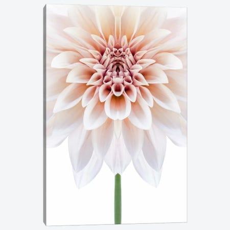 Cafe au Lait Dahlia Symmetry Canvas Print #FEN63} by Alyson Fennell Canvas Art Print