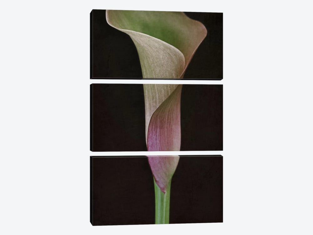 Calla Lily I by Alyson Fennell 3-piece Canvas Print