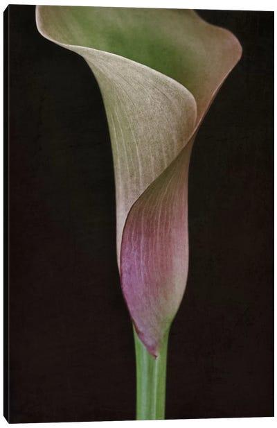 Calla Lily I Canvas Art Print