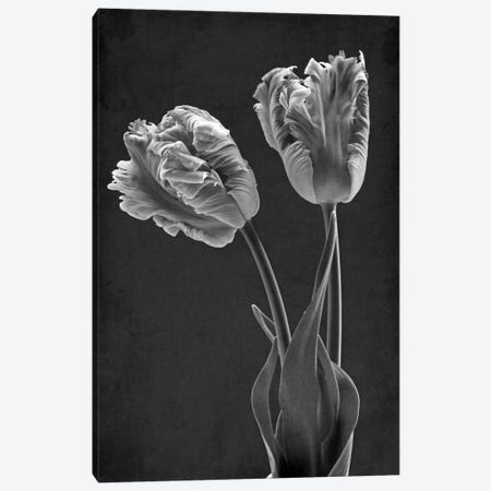 Mono Parrot Tulips Canvas Print #FEN67} by Alyson Fennell Canvas Art