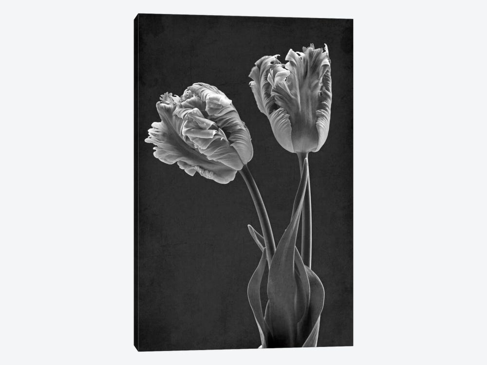 Mono Parrot Tulips by Alyson Fennell 1-piece Canvas Artwork