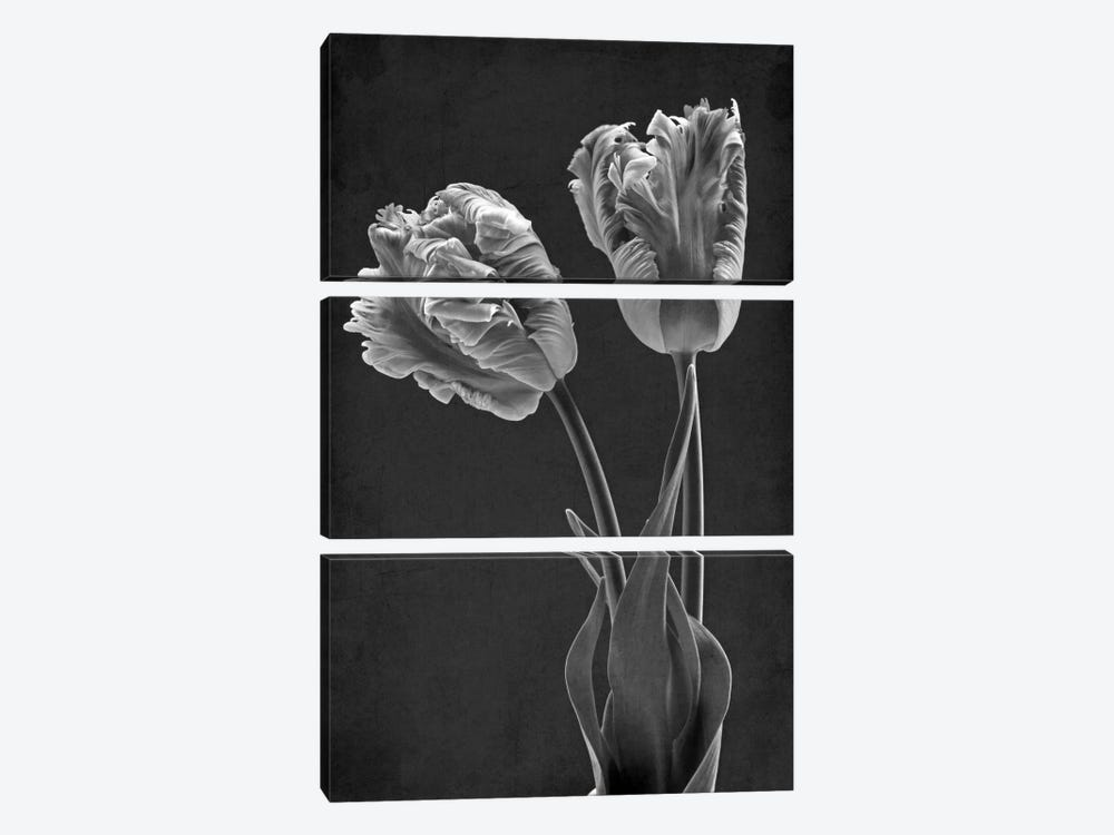 Mono Parrot Tulips by Alyson Fennell 3-piece Canvas Artwork