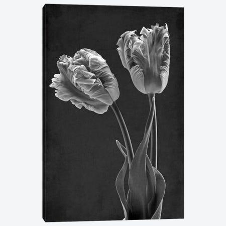 Mono Parrot Tulips Canvas Print #FEN67} by Alyson Fennell Canvas Art