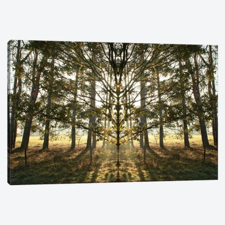 Morning Tree Sun Flare Symmetry Canvas Print #FEN68} by Alyson Fennell Art Print